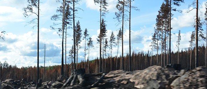 Miljonstöd till skogsägare