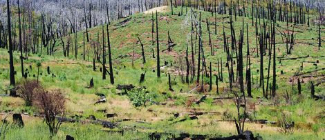 Aktörer kompenseras efter skogsbränder