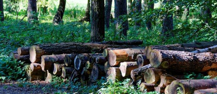 Det stormfällda virket måste ut ur skogen senast den 1 juli. Bild: Pixabay/cc