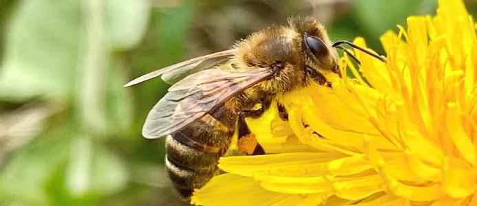 forskning, lokalsinne, insekter